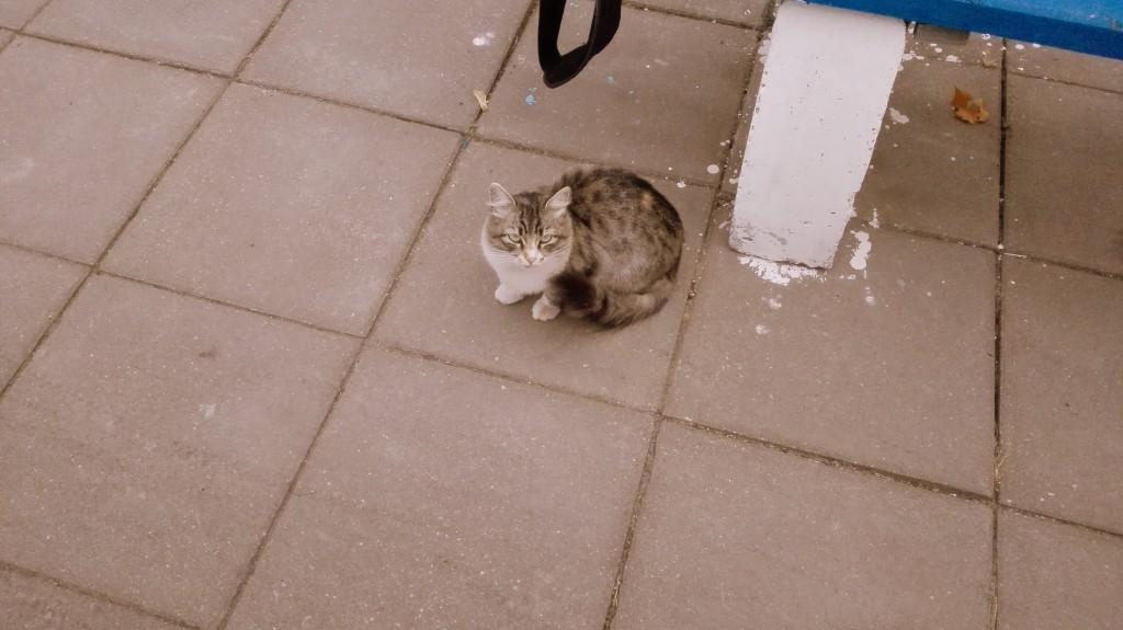 Вечный пассажир Шестеровки - голодная кошка