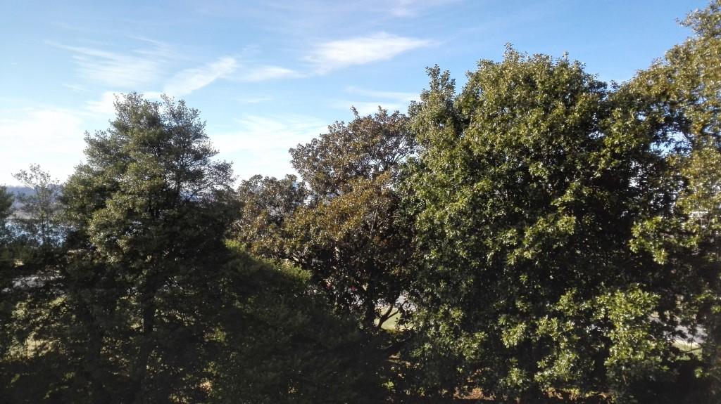 В Вашингтоне множество вечнозеленых деревьев